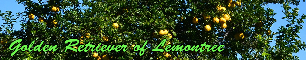 Retriever of Lemontree