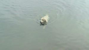 Cooper schwimmt!!!