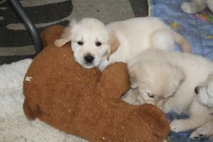 Ein Teddy