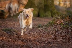 Golden Mabel Lauf