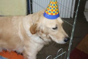 Mabel eröffnet den Karneval