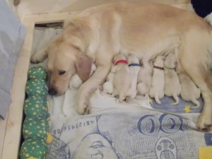 Mabel und Babys