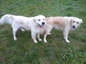 Mabel und Pete 19.10.2015